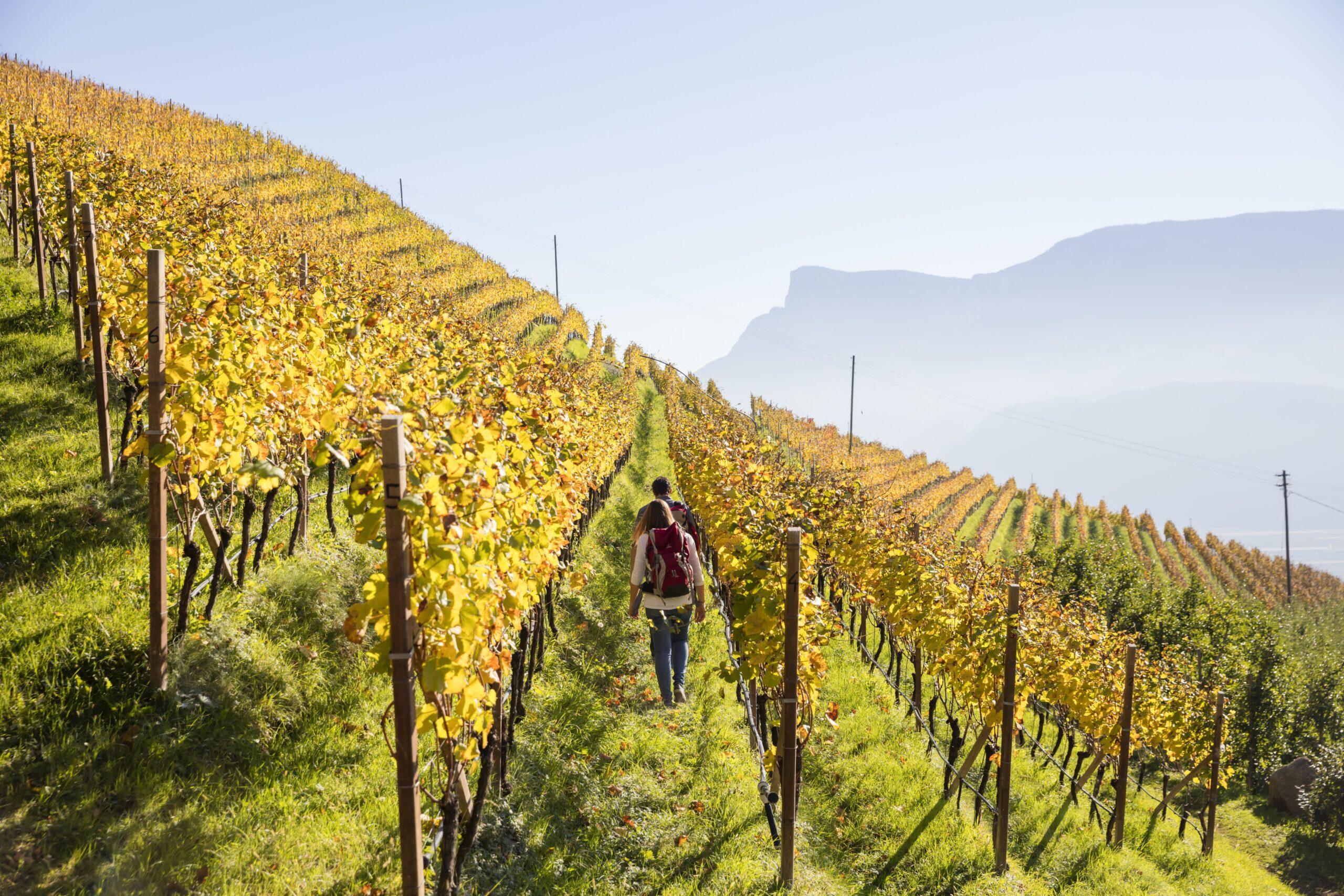 Im Herbst färben sich die weitläufigen Weinberge