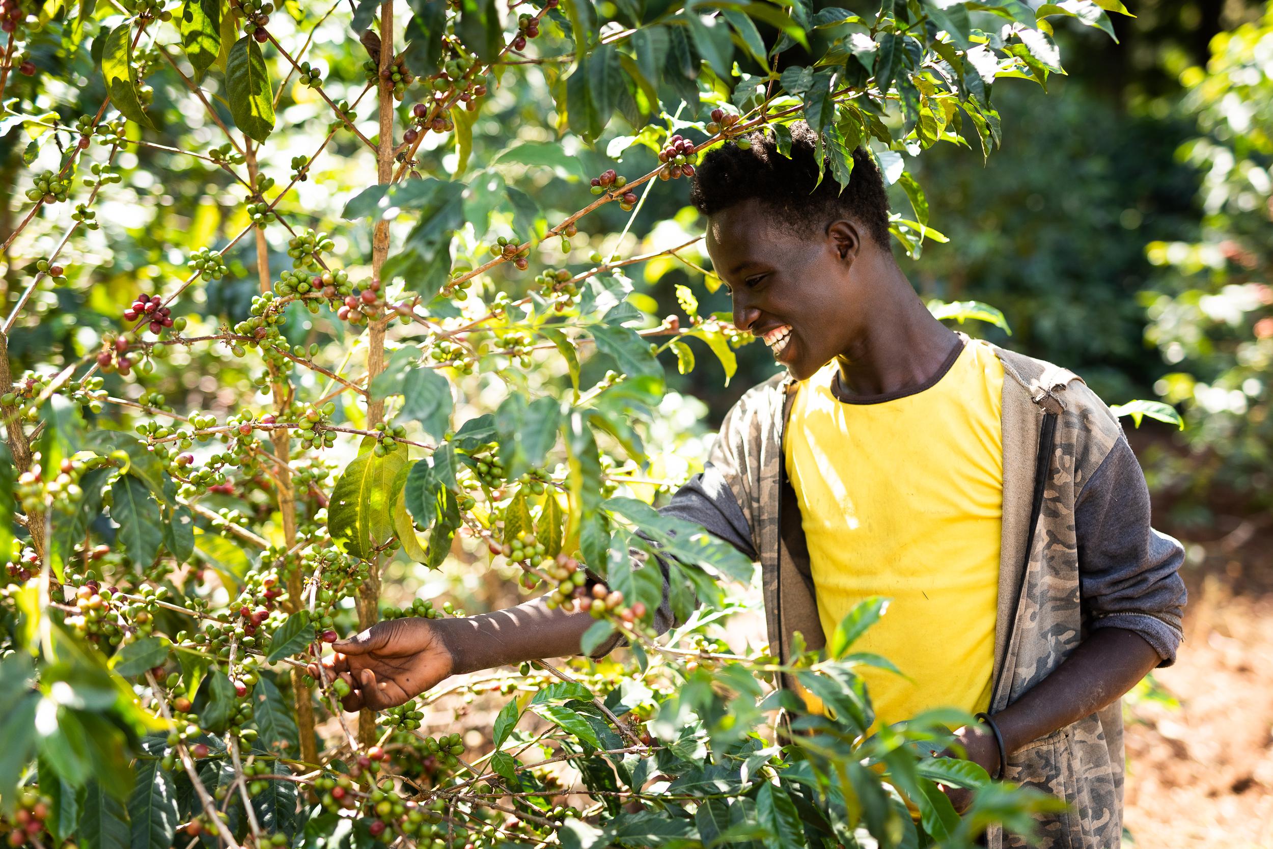 Dallmayr Kaffeeernte Äthiopien
