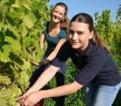 """Erster Lesetag für die Winzer der Weinmanufaktur Gengenbach-Offenburg brachte 23 000 Liter Neuen Wein (lifePR) (Gengenbach, 06.09.21) Traditionell startete die Weinmanufaktur Gengenbach-Offenburg am gestrigen Montag als eine der Ersten mit der Weinlese 2021 in Baden. Geplant war eine Menge von 30 Tonnen, was einem Volumen von rund 23 000 Litern Neuem Wein entspricht. Der Federweiße wird ab dem 9. September in den Vinotheken und im Lebensmittelhandel erhältlich sein.   Nicht nur in der Lage """"Zeller Abtsberg"""" in Offenburg-Zell-Weierbach war die Lesemannschaft von Reiner End, stellvertretender Vorstandsvorsitzender der Weinmanufaktur Gengenbach-Offenburg am Start. """"Es handelte sich nicht um eine Frühernte, sondern es war ein voller Lesetag für alle Winzer, die zur Weinmanufaktur gehören"""", erläuterte Geschäftsführer Christian Gehring gestern vor der Presse im Weinberg.   Die durchschnittlichen Oechsle beim Findling lagen am ersten Lesetag im Rebstück von Reiner End zwischen 76 und 78 Grad. Die eigentliche Hauptlese für die """"Weine mit Herz und Hand"""" aus der Weinmanufaktur Gengenbach-Offenburg wird am 15. September beginnen und dieses Jahr bis Mitte, Ende Oktober dauern. Erwartet wird Witterungsbedingt ein schwächerer Jahrgang als in den Jahren davor. Gute Qualitäten erwarten die Erzeuger bei den Weißweinen. """"Es kann ein schöner Jahrgang werden, der Weine mit schöner Aromatik hervorbringt, wenn jetzt die Nächte kühl und die Tage sonnig bleiben,"""" erklärt Gehring. Auch die Qualität beim Spätburgunder Rotwein hängt jetzt stark vom Wetter und der Sonne ab.  Die Frostereignisse im Frühjahr waren nahezu flächendeckend. Die unteren Bereiche der Lagen sind bisweilen stark geschädigt worden, obere Bereiche der Parzellen zum Teil wenig. Besonders betroffen sind frühe Sorten wie Chardonnay und Gewürztraminer. Durch das Frostereignis wird es auch zu einer ungleichen Reife der Trauben kommen. """"Das wird die eigentliche Herausforderung bei der Weinlese 2021"""", betont Reiner End. Auch bed"""
